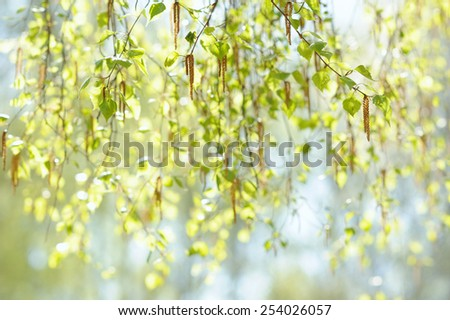 Natural background with fresh spring twig of birch in selective focus - stock photo