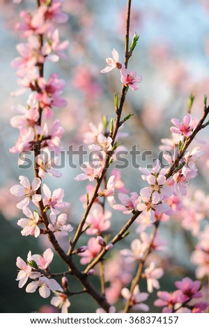 Natural background with fresh spring twig with pink flower in selective focus - stock photo