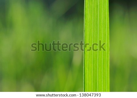 Natural background with green grass blade and blurred background. Space on left side - stock photo