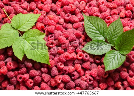 natural background with raspberry and two green leaves - stock photo