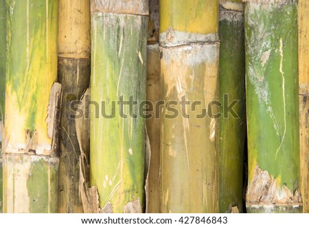 natural bamboo background - stock photo
