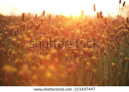 Natural Bokeh, blurred bokeh, blur background. - stock photo