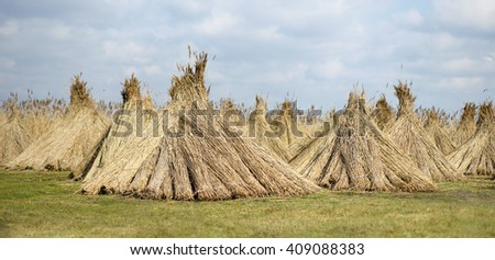 Natural building material - reed banner - stock photo