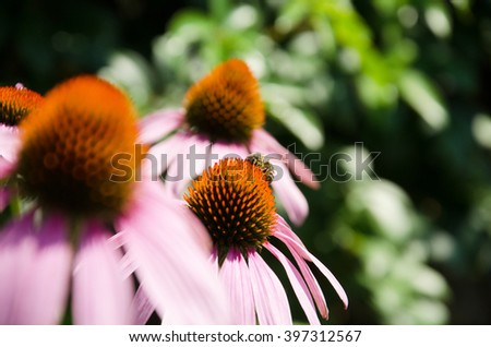 natural cures - stock photo