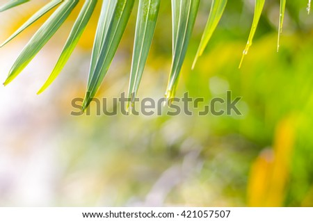 Natural defocused and depth of field (DOF) effect of palm leaf, the bokeh effect - stock photo