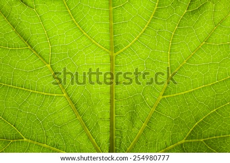 natural design on leaf - stock photo