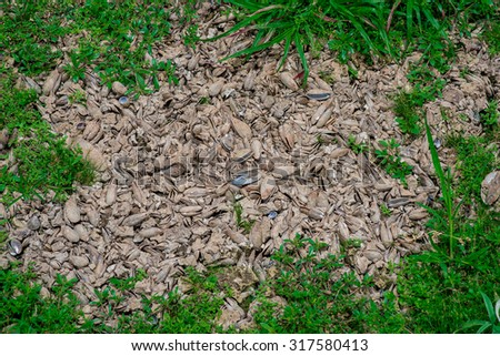 natural dry texture and background in dry season, Thailand - stock photo
