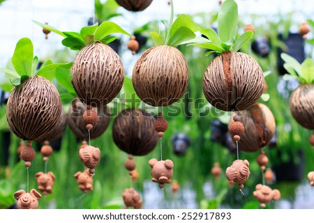 natural fern leaves in nature suide tree (pong-pong) Othalanga  wood seed decorated as blind curtain ,home outdoor garden decoration - stock photo