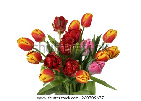 Natural flowers for floral design and greeting card - bunch of various tulips isolated on white background - stock photo
