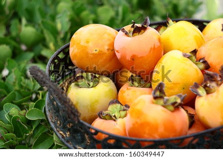 natural fruits in basket with leaf in garden - stock photo