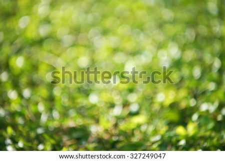natural green blurred background with swirl bokeh effect     - stock photo