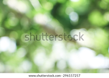 Natural green bright blur background of sunny summer forest. - stock photo