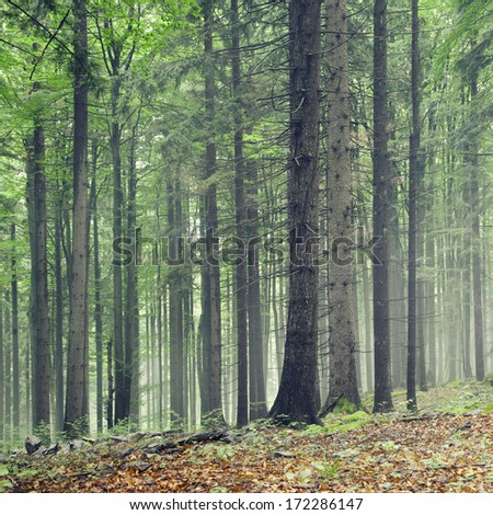 Natural green color forest trees. - stock photo