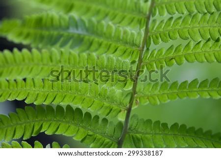 Natural green fern leaf. Closeup. Soft focus. - stock photo