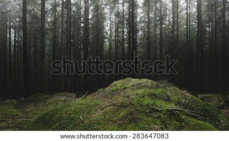 natural green forest background - stock photo