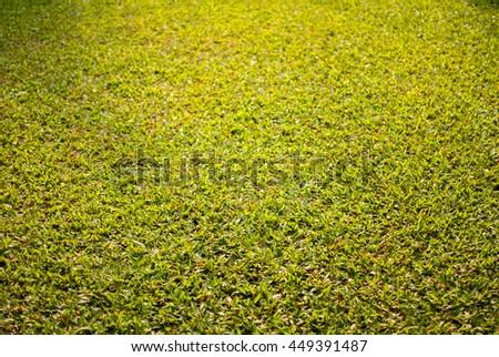 Natural green grass closeup - stock photo