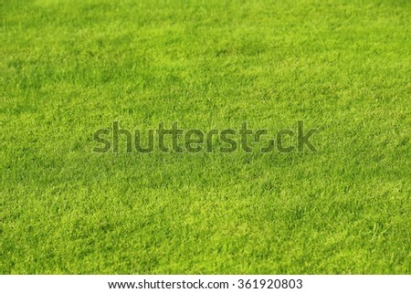 Natural green lawn background - stock photo