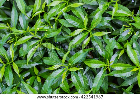 Natural green leaf background texture for design. - stock photo