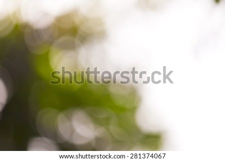 Natural green leave, blurred background. - stock photo