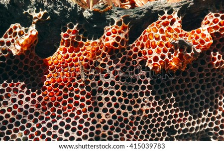 Natural honey bee bush honeycomb in a fallen tree, Sydney, Australia - stock photo