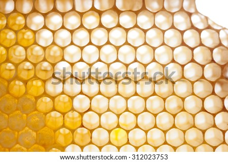 Natural honeycomb pattern. Organic yellow, gold honeycomb texture with fresh honey. closeup of honey combs. Shallow depth of field, soft focus - stock photo