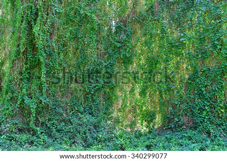 Natural Jungle background. Tropical rain forest  - stock photo