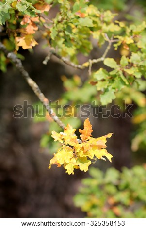 Natural Monument, oak - stock photo