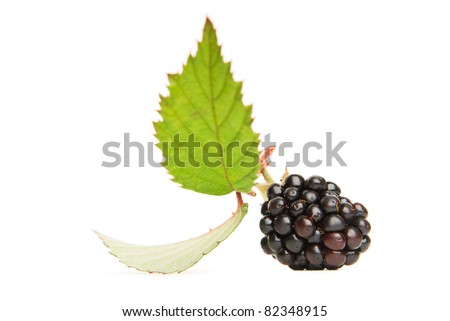Natural picked Blackberry with leaves isolated on white background - stock photo