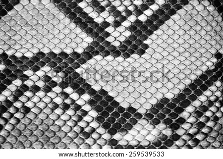 Natural python  leather, skin texture for background. - stock photo
