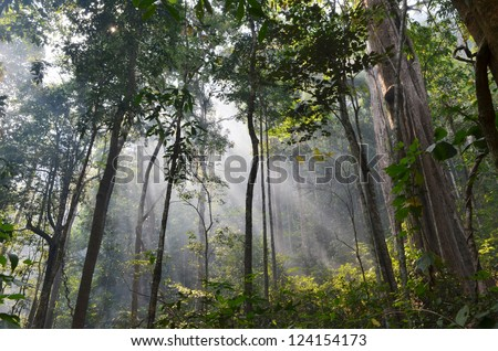 natural resource in tropical rain forest, Khao Yai National Park, Thailand - stock photo