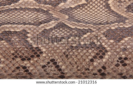 Natural skin of a python 3 - stock photo