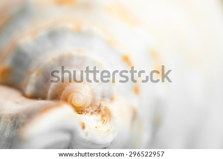 Natural spa elements - seashell with starshell - stock photo