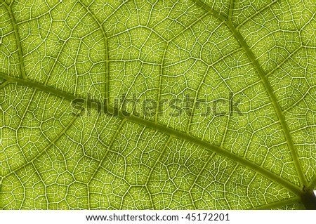 Natural structure of green leave - stock photo