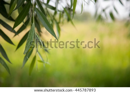 natural summer background, blurred image, shallow depth of field. selective focus - stock photo
