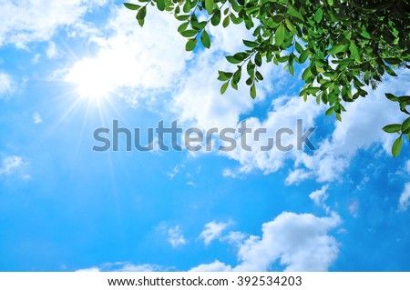 Natural sun flare with blue clouds sky and green leaves - stock photo