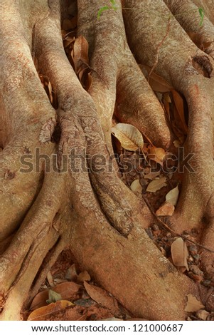 Natural tree root. - stock photo