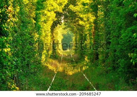 "Natural tunnel of ""love"" formed by trees in Romania.  - stock photo"