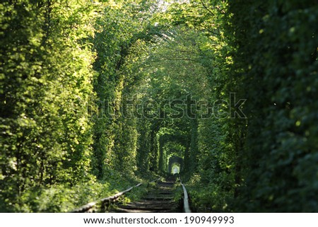 Natural tunnel of love formed by trees in Ukraine - stock photo