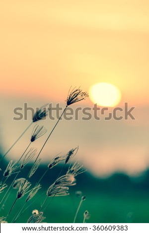 Natural vintage background. Autumn grass and wildflower background. Retro filter.  - stock photo