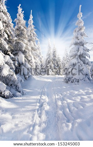 natural winter landscape, snowy firs and blue sky and sunlight in background - stock photo