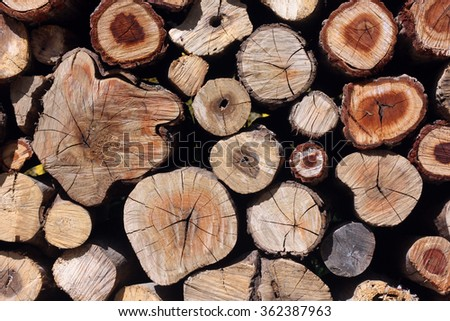 natural wooden logs background, top view - stock photo