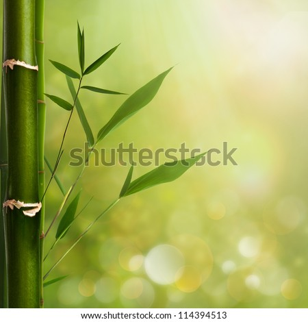 Natural zen backgrounds with bamboo leaves - stock photo
