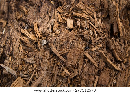 naturally decaying log in the forest - stock photo