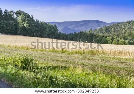 Nature. - stock photo