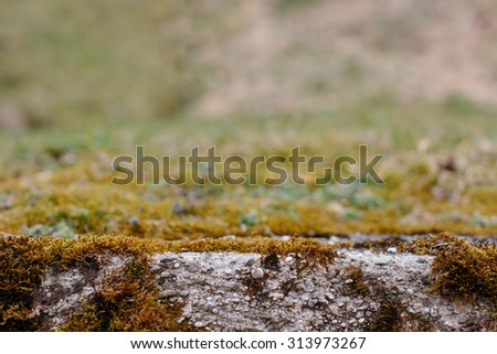 Nature Background - Close Up of Moss Covered Stone with Blurred Background and Copy Space - stock photo