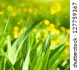 Nature background grass leaves - stock photo