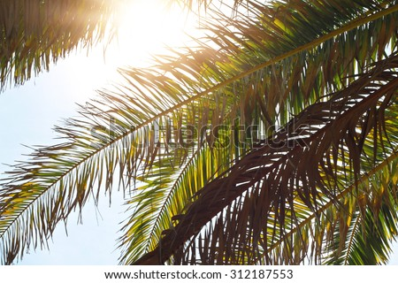 Nature background, palm leaves trees against blue sky wallpaper, summer holiday, vacation postcard concept  - stock photo