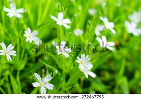 Nature background with little white flowers - stock photo