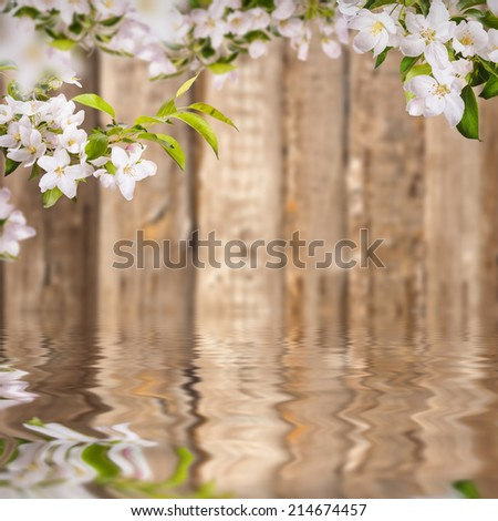 Nature composition. Apple flowers on a blurred wooden background, reflected in water - stock photo