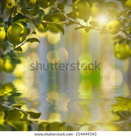 Nature composition. Green apples on a blurred nature background, reflected in water - stock photo